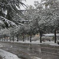 Магнолии в снегу :: Виолетта
