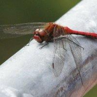 dragonfly :: Yur Lo