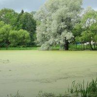 Александровский сад :: Алина Шевелева