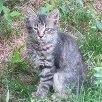 Котёнок :: Дмитрий Никитин