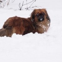 Собачка в снегу :: Анатолий Бугаев