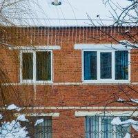 Холодные окна :: Олеся Енина