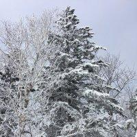 Сахалинские пейзажи. :: Татьяна ❧
