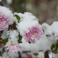 3 дня зимы :: Виолетта