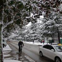 Когда в Адлере зима :: Виолетта