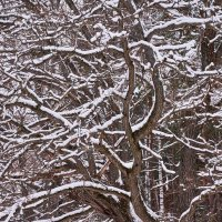 Просто зима :: Gennadii Kuznetsov