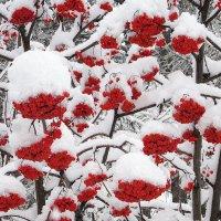В саду горит огонь рябины красной. :: Мила Бовкун
