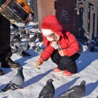 Зимняя кормёжка :: Виктор Шандыбин