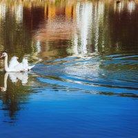 Белый лебедь на пруду :: Татьяна Афанасьева