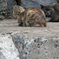 Суровый кот :: Татьяна Исаева