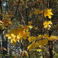 Осенние этюды Фото №1 :: Владимир Бровко
