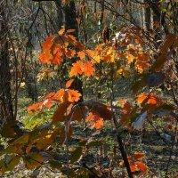 Осенние этюды Фото №3 :: Владимир Бровко