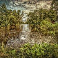 Белый лебедь на пруду... :: Вячеслав Мишин