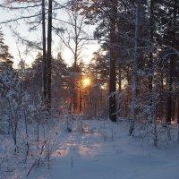 В новогоднем лесу... :: Александр Попов