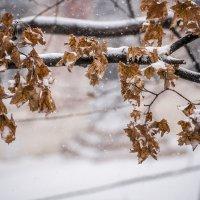 Первый снег 2016 :: Сергей Волков
