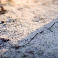 Снежок :: Виктория Камышникова