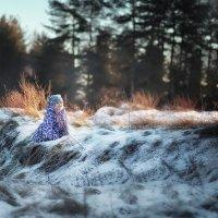 Волшебные новогодние каникулы :: татьяна иванова