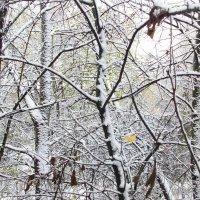 начало зимы :: владимир