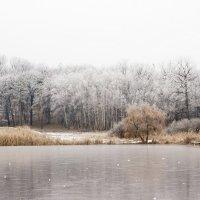 Зима :: Petya Parkhomenko