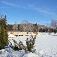 Солнечная зима.Пруд :: Лидия (naum.lidiya)