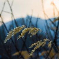 "Зимние ""цветы"" :: Julia Martinkova"