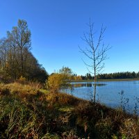 Вот и осень ... :: Владимир Икомацких