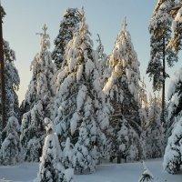 Зимние соборы :: Николай Танаев