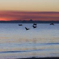 И еще закат на острове Моретон :: Антонина