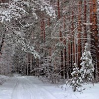 Сегодня лес как арфы струны... :: Лесо-Вед (Баранов)