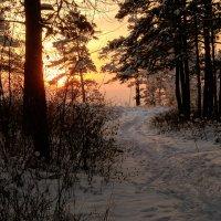 Лесное Солнце. :: Александр Ломов