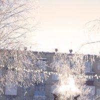 ура, зима.... :: Вера Арасланова