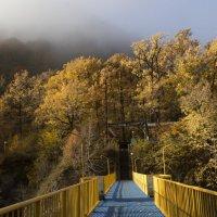 Мост :: Бронислав Богачевский