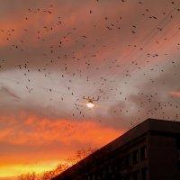 вечерние птицы :: Александр Прокудин