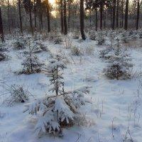 С Рождеством, друзья! :: Андрей Лукьянов