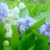 Весна :: Ira Chupryna