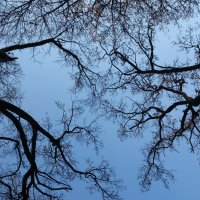 Осень :: Ira Chupryna