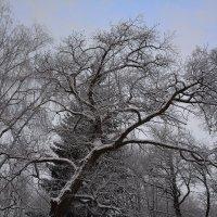 Когда деревья были большими :: Константин Жирнов