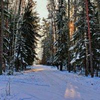 В  лесу. :: Валера39 Василевский.