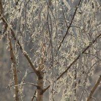 Чувствуется....Зима! :: Валерия Лидерман