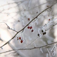 Зимняя нежность. :: Инна Малявина