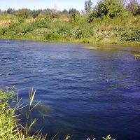 Река Медведица. Саратовская обл. :: Анатолий Коваль