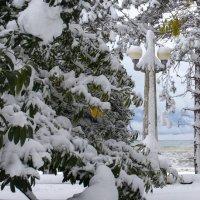 Фонарный столб в снежном наряде :: Анна Тесликова