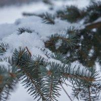зима пришла.... :: Виктор
