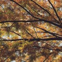 Краснодарская осень :: Валерия Белова