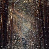 Сказочный лес :: Евгений Шевелев