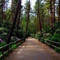 Рододендроновый парк в Хельсинки :: Ирья Раски