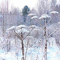 Зимний этюд №1 :: Александр Запылёнов