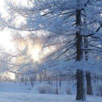 Мороз и солнце :: Владимир Федоров