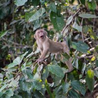 Планет обезьян! :: Анастасия Ушакова