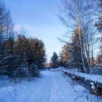 Зимняя дорога. :: Ольга